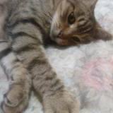 Rita, Chat  à adopter