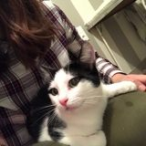 Babydoll, Chat  à adopter