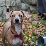 Bruno, Chien  à adopter
