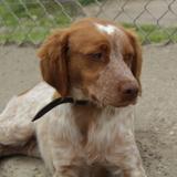 Kiwi, Chien à adopter