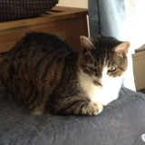 Chanel, Chat à adopter
