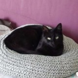 Ijanyre, Chat à adopter
