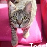Joost, Chat à adopter