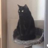 Hanakin, Chat à adopter