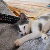 Chogan (chaton), Chat  à adopter