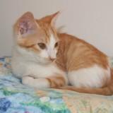 Murphy, Chat  à adopter