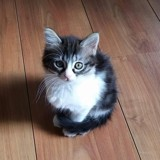 Mei-ly, Chat  à adopter