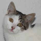 Mycose, Chat  à adopter