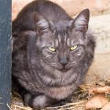 Jino, Chat  à adopter