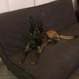 Rosko, Chien  à adopter