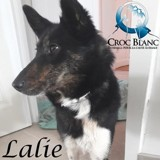 Lalie, Chien  à adopter