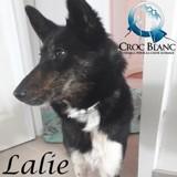 Lalie, Chien  à adopter