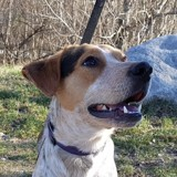 Fotsy, Chien  à adopter