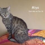 Miya, Chat  à adopter