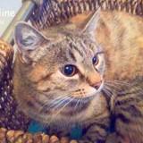 Kaline, Chat  à adopter