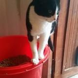 Lili, Chat  à adopter