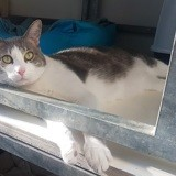 Inzo, Chat à adopter