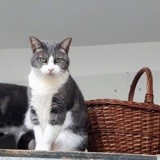 Ise, Chat à adopter