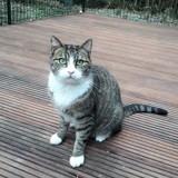 Jinja, Chat à adopter