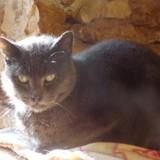 Myangel, Chat  à adopter