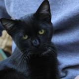 Nutz, Chaton à adopter