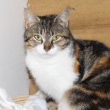 Lily, Chat à adopter