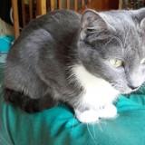 Nathalia, Chat  à adopter