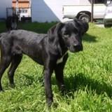 Bobine, Chiot  à adopter