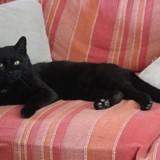 Tizon, Chat  à adopter