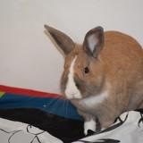 Basile, Animal à adopter
