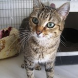 Malice, Chat  à adopter
