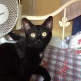 Panenka, Chat  à adopter