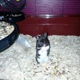 Mia, Animal  à adopter