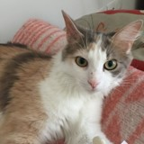 Nouria, Chat  à adopter