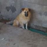 Maella, Chien  à adopter