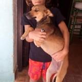 Rosita, Chiot  à adopter