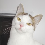 Plusieurs chatons femelles, Chaton gouttière à adopter