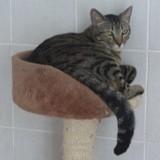 Nylia, Chat à adopter