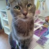 Maxou , un amour de chat, Chat gouttière à adopter