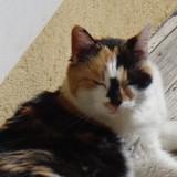 Gaia, Chat à adopter