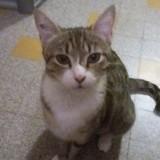 Mîn, Chat  à adopter