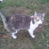 Gaya, Chat  à adopter