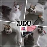 Nuka, Chaton européen à adopter