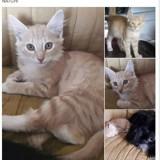 Natchi, Chaton  à adopter