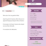 Nitro, Animal  à adopter