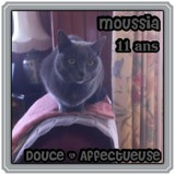 Moussia, Chat  à adopter