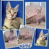 Kimi, Chaton  à adopter