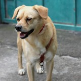 Rocky, Chien à adopter