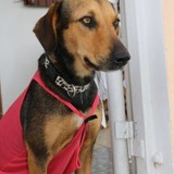 Noly, Chien  à adopter