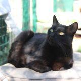 Naya, Chat  à adopter